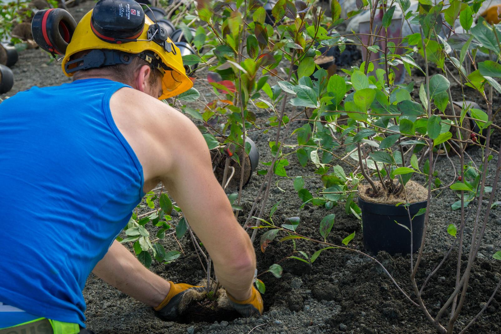 Gartner som planter blomst i jord